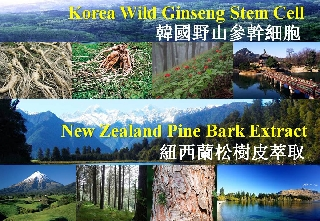 Korean Wild Ginseng Stem Cell + New Zealand Radiata Pine Bark Extract  (GPB001)